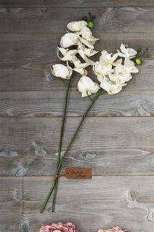 Set Of 2 White Orchid Stems