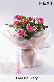 Mango Pink Striped Midi Dress