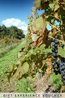 Luxury Vineyard Tour With Overnight Stay For Two