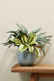 Mixed Aloe Ceramic Pot