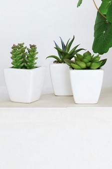 Set Of 3 Mini Succulents