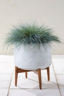 Wide Concrete Planter With Wooden Legs