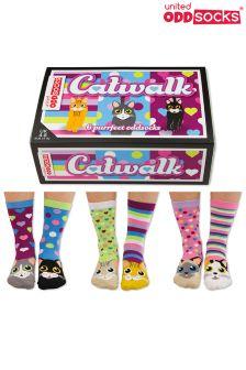 Cockney Spaniel Catwalk 6 Odd Socks
